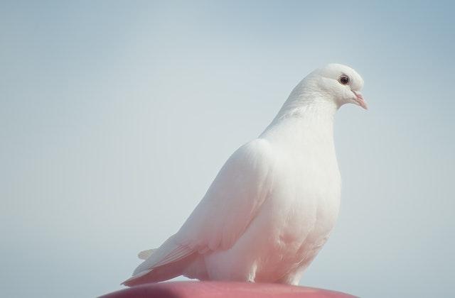 كرسي الحوار و السلام